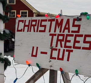 Hansens Christams Trees Sign